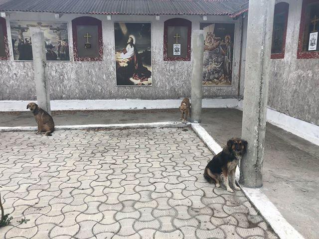 il-salvataggio-dei-18-cani