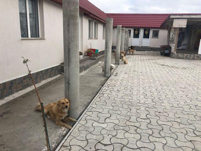 il-salvataggio-dei-18-cani 1