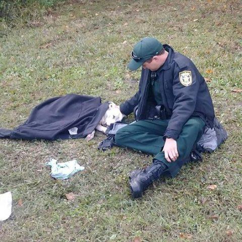 lo-sceriffo-che-aiuta-il-cane-ferito