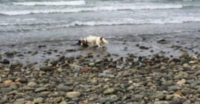 la-scoperta-del-cucciolo-sulla-riva-del-mare