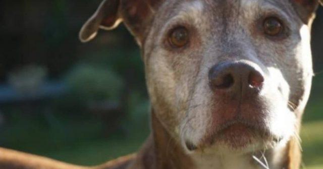 10-sintomi-che-il-vostro-cane-sta-per-attraversare-il-ponte-arcobaleno