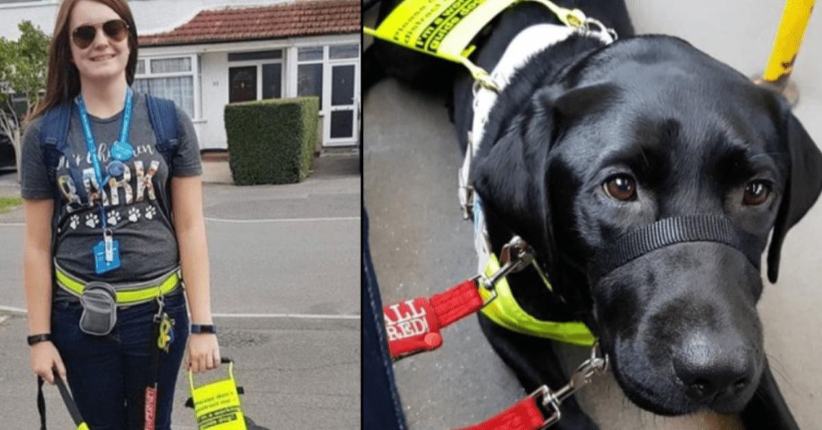 l'esperienza-terribile-sul-bus-di-Megan-e-Rowley-il-cane-guida