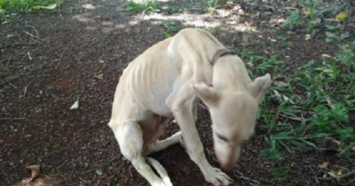 il-salvataggio-dei-2-cani-vittime-di-maltrattamenti
