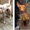 immagini-che-dimostrano-cosa-l'amore-riesce-a-fare-per-i-cani-maltrattati