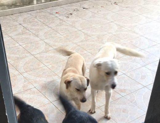 Bruno-cane-ucciso