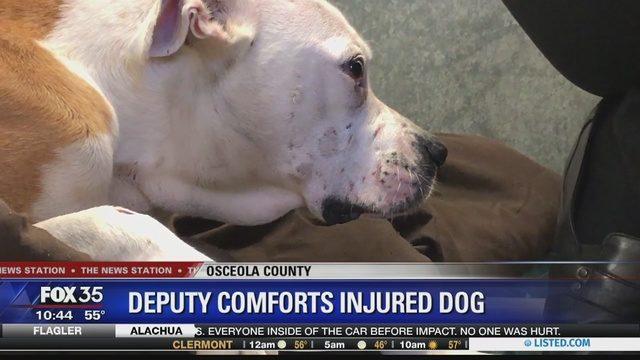 lo-sceriffo-che-aiuta-il-cane-ferito 4