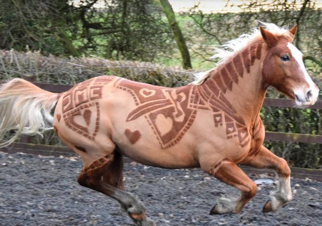 horse-barber