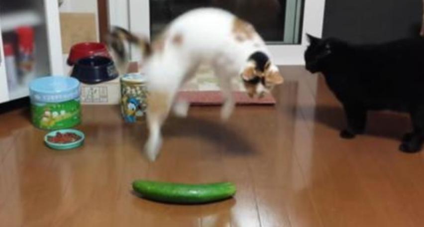 Perché I Gatti Sono Terrorizzati Dai Cetrioli Bigodino