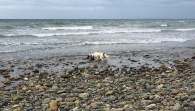 cane-salva-la-vita-ad-un-cucciolo-di-delfino