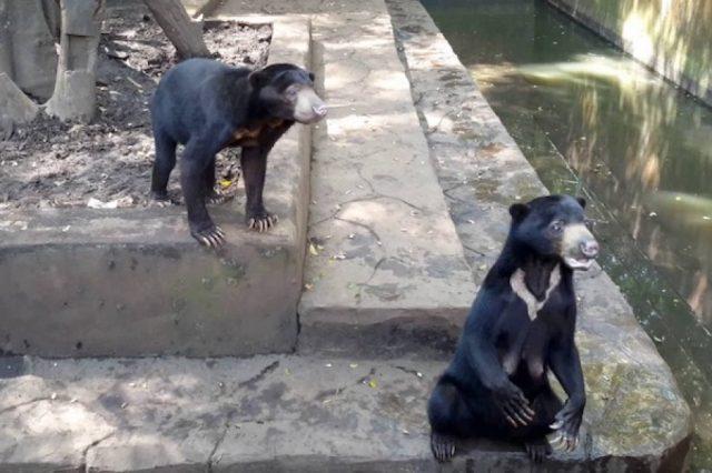 le-condizioni-degli-orsi-nello-zoo 2