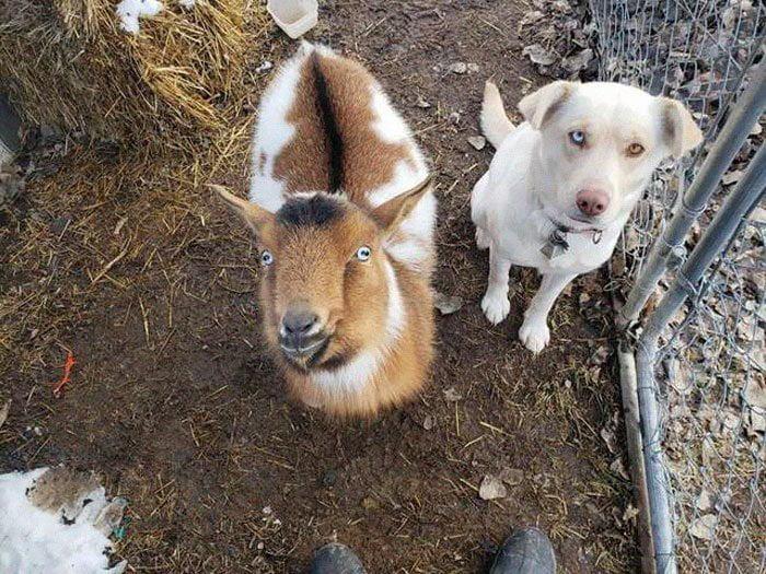 Cane si allontana di casa e torna il giorno dopo con due nuovi amici