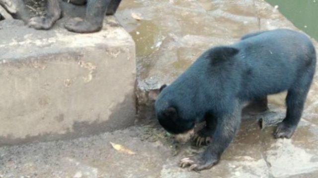le-condizioni-degli-orsi-nello-zoo 3