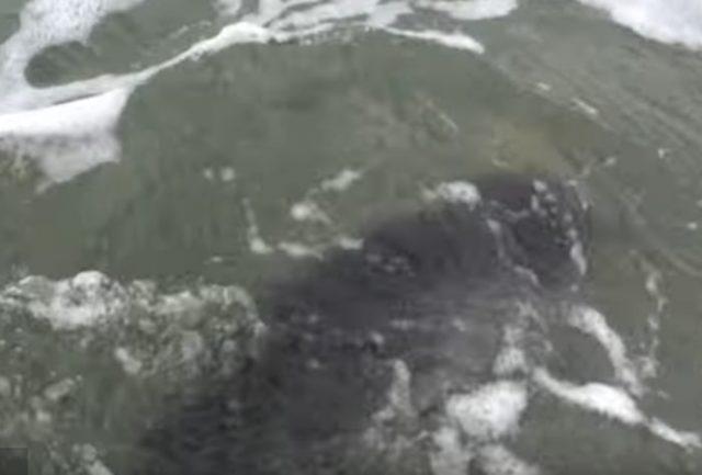 cane-salva-la-vita-ad-un-cucciolo-di-delfino 2