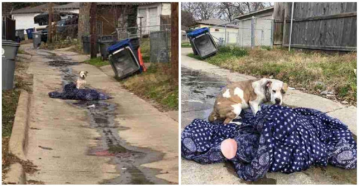 Camilla, la cagnolina abbandonata come un rifiuto
