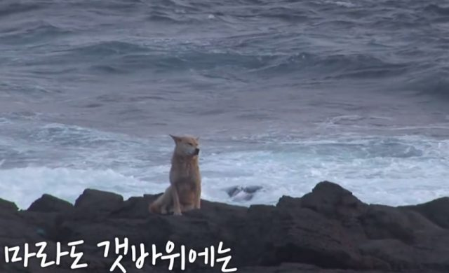 cane-aspetta