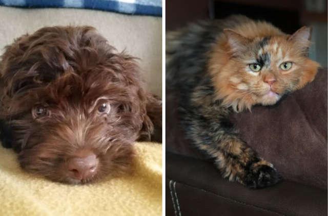 Donna Immortala Il Cane E Il Gatto In Un Momento Di Tenerezza Bigodino