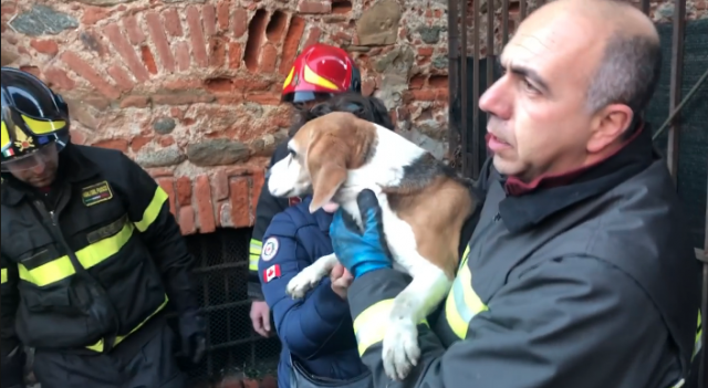 cane-salvato-pompieri
