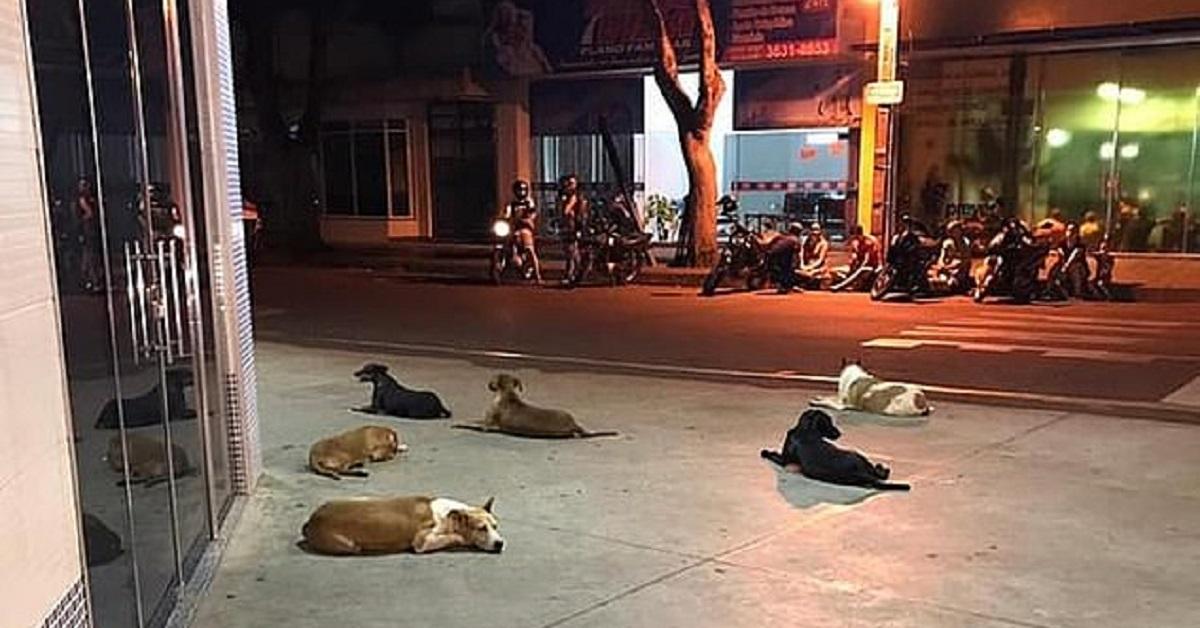 Cani aspettano proprietario senzatetto davanti all'ospedale
