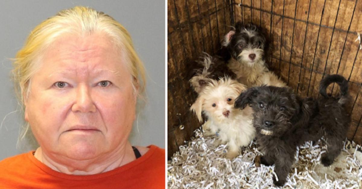 Le trovano in casa 44 cani morti e 166 in condizioni critiche, arrestata 65enne