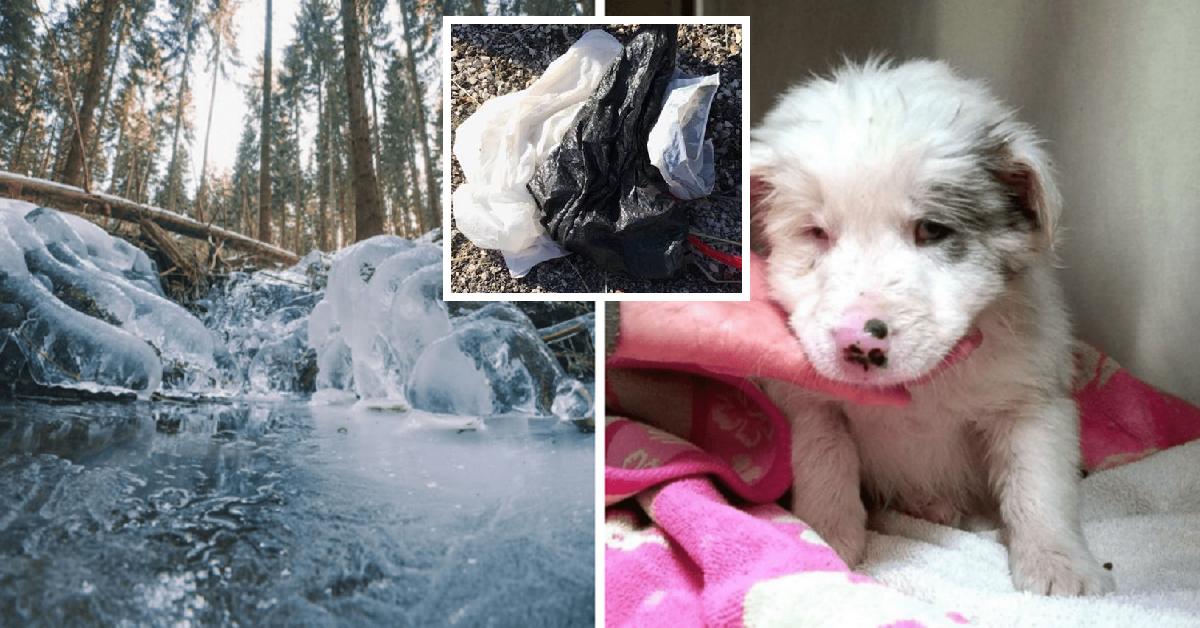 Chapel, il cucciolo abbandonato in torrente ghiacciato