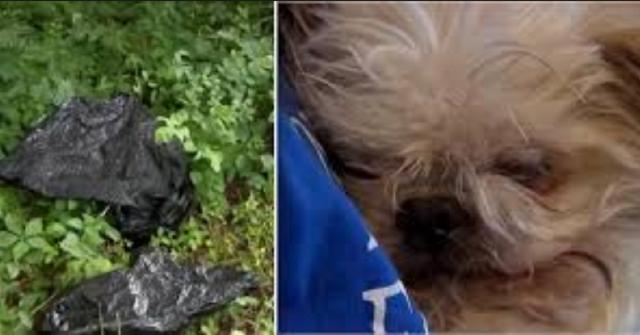 donna-salva-cane-anziano-scaricato-a-bordo-strada-in-un-sacco-della-spazzatura