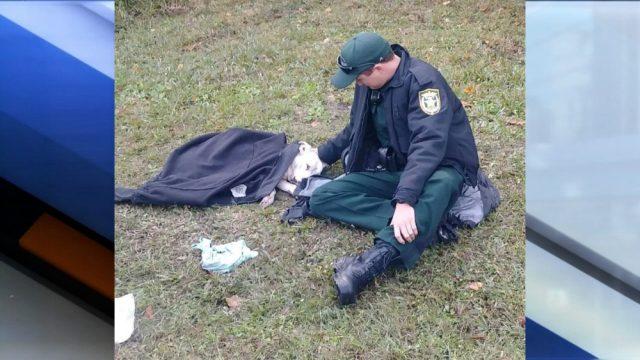 lo-sceriffo-che-aiuta-il-cane-ferito 2