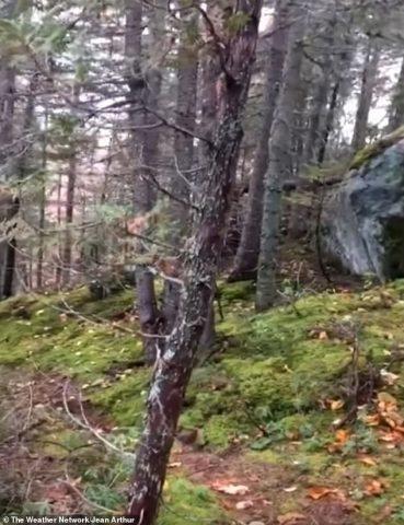 foresta-che-respira