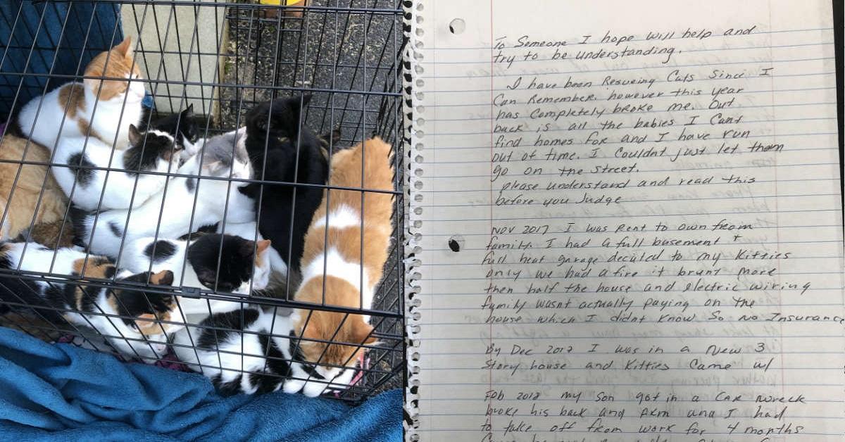 gatti-e-gattini-abbandonati-in-una-gabbia
