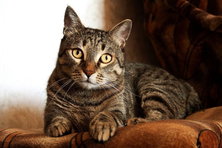 gatto-anziano-casa