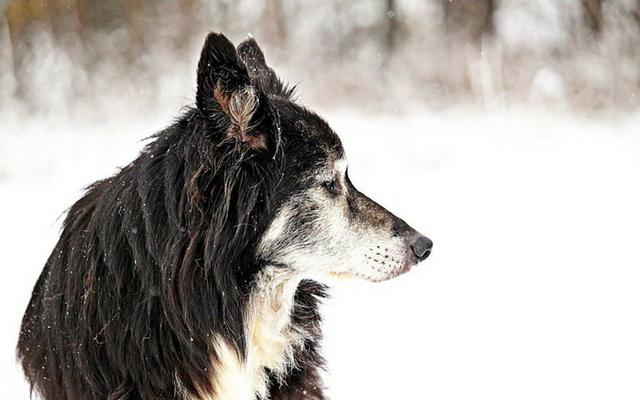 10-sintomi-che-il-vostro-cane-sta-per-andare-via-per-sempre