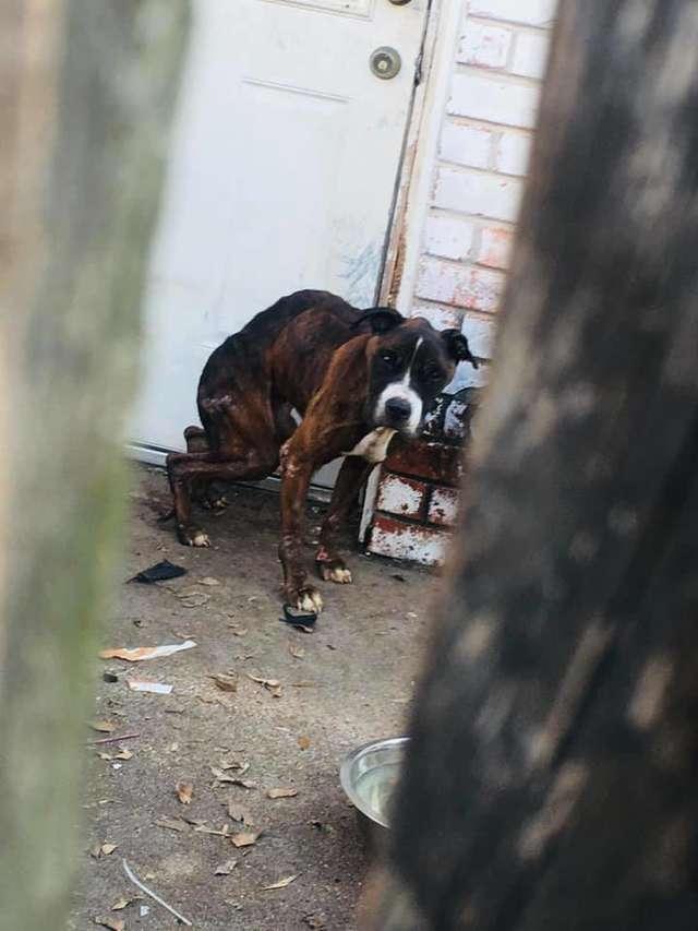 joshua-il-cane-abbandonato-sul-patio