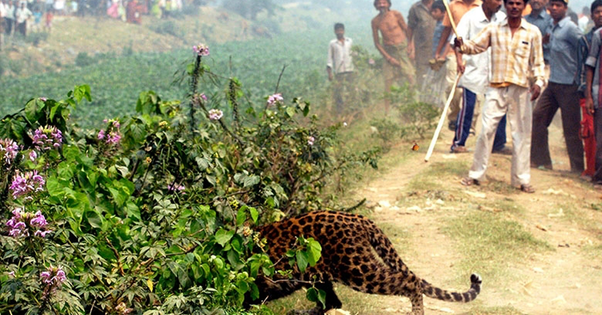 Bimba di 3 anni decapitata da un leopardo che l'ha rapita dalle ginocchia della madre