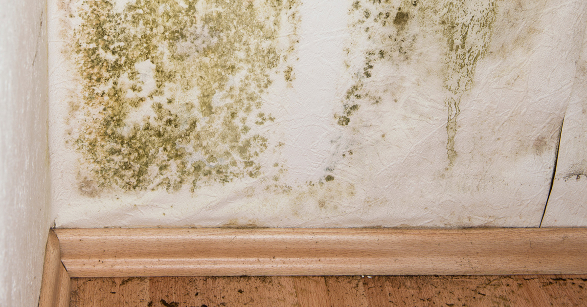 7 sintomi dell'esposizione alla muffa (sia in casa che fuori)