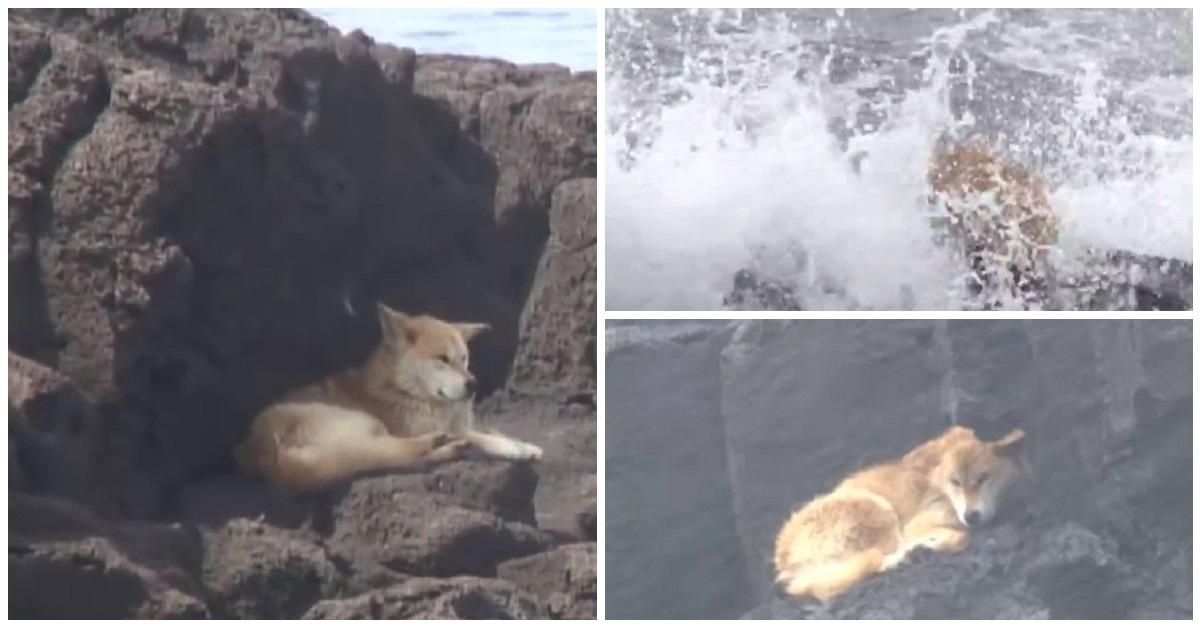nureongi-il-cane-che-viveva-sugli-scogli-di-marado