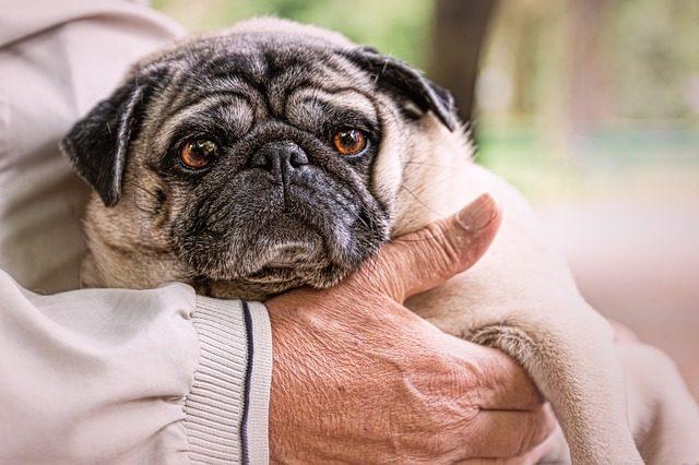 10-sintomi-che-il-vostro-cane-sta-per-andare-via-per-sempre 3