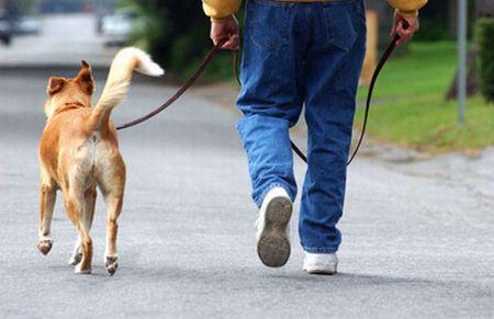 passeggiata-cane-pozzo