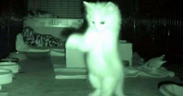proprietario-si-chiede-perche-i-gatti-dormono-tutto-il-giorno-poi-una-notte-lo-scopre