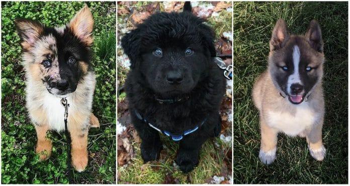 razze di cane più belle
