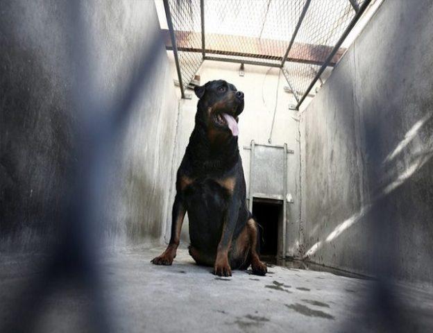 cane-salva-la-vita-di-un-neonato-abbandonato 3