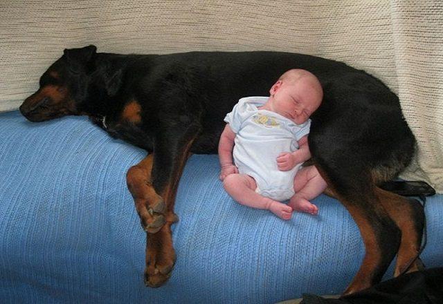 cane-salva-la-vita-di-un-neonato-abbandonato 1
