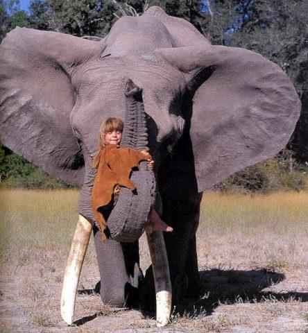 tippi-degre-elefante