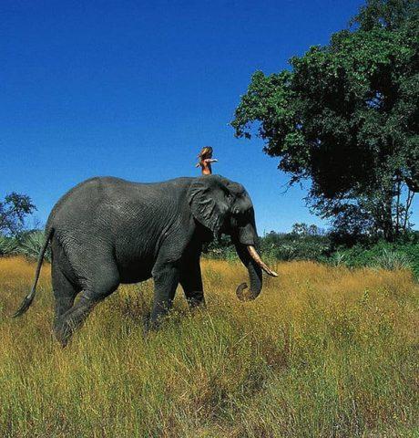 tippi-elefante