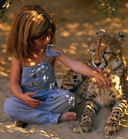 tippi-ghepardo