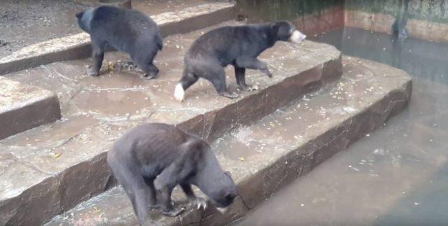 le-condizioni-degli-orsi-nello-zoo
