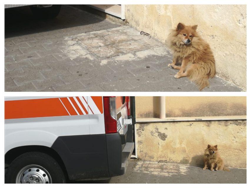 Volpino da 3 anni aspetta che il padrone esca dall'ospedale ma è morto