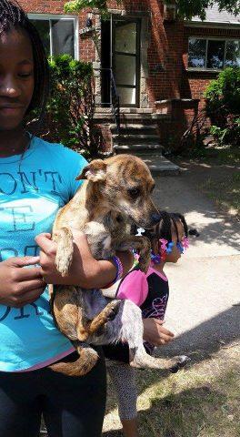 4-ragazzini-salvano-la-vita-di-un-cane 4