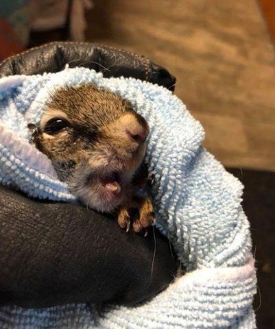 il-grande-dente-dello-scoiattolo 3