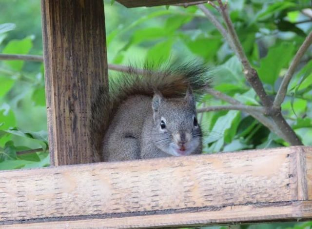 il-grande-dente-dello-scoiattolo 4