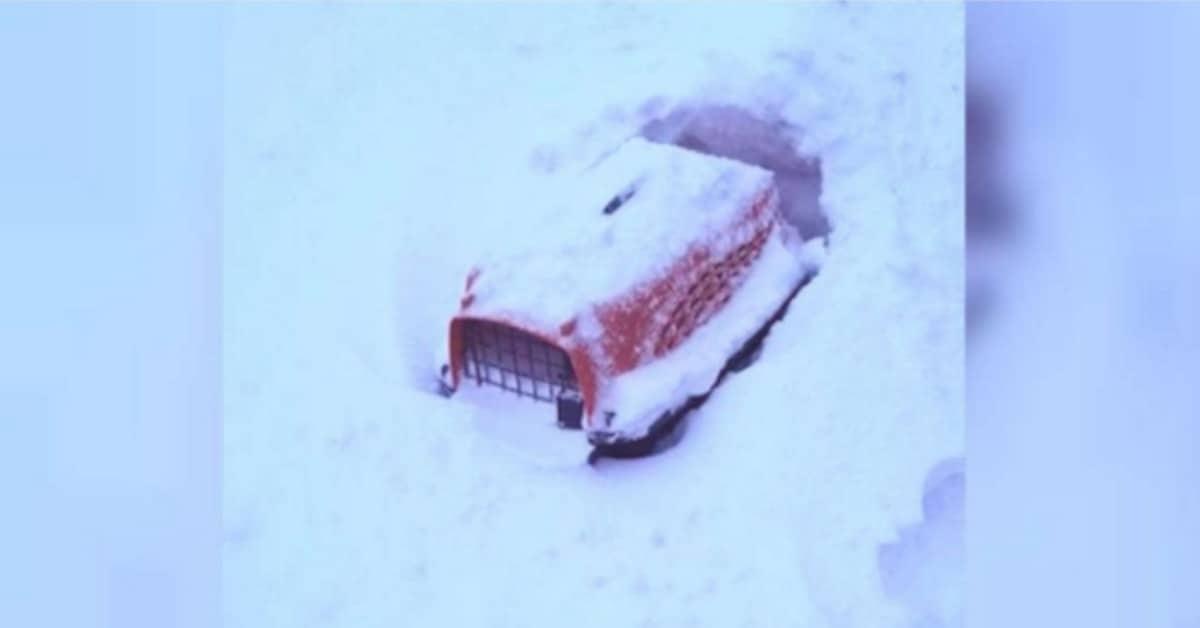 il-salvataggio-del-gatto.abbandonato-nella-neve