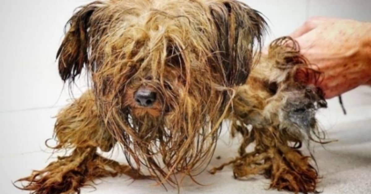 Cesar-il-cagnolino-che-ha-vissuto-tutta-la-sua-vita-in-una-scatola